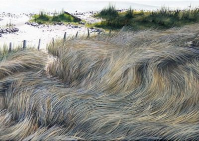 JN4 River Reeds 1